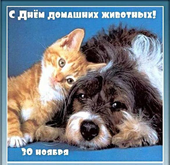 Красивая открытка с днем домашних животных