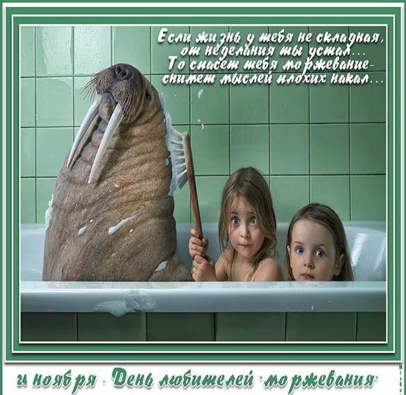 Красивая открытка с днем моржа