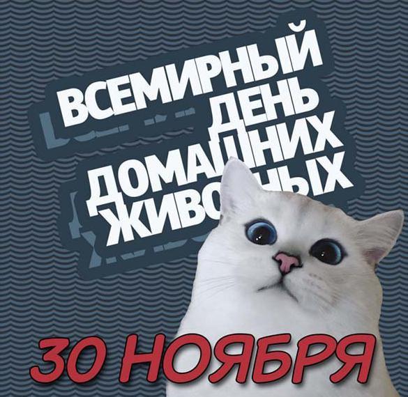 Картинка на международный день домашних животных