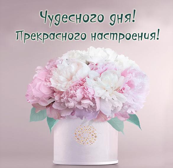 Открытка чудесного дня прекрасного настроения