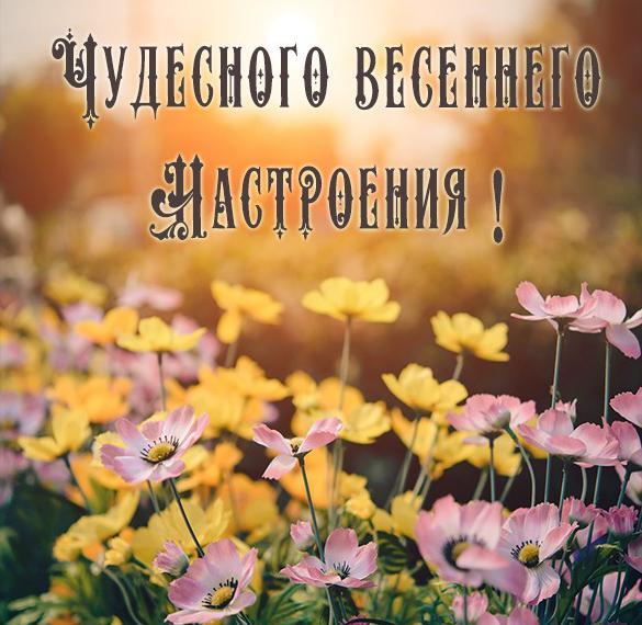 Открытка чудесного весеннего настроения