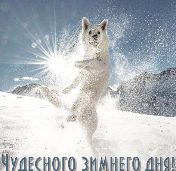 Открытка чудесного зимнего дня