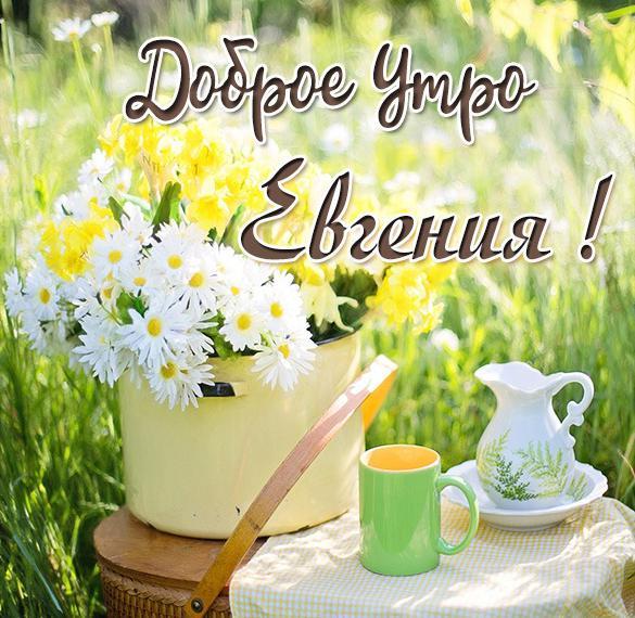 Открытка доброе утро Евгения
