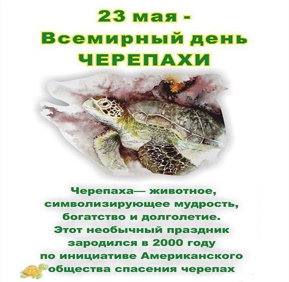 Красивая открытка с праздником днем черепахи