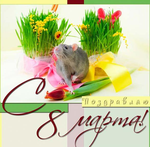 Прикольная фото открытка на 8 марта