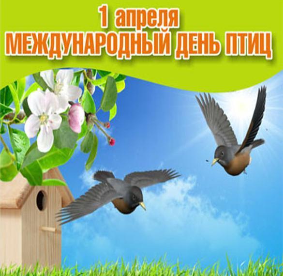 подмосковье праздник птиц открытка буду лежать