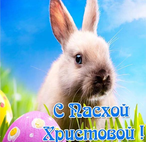 Открытка с пасхальным кроликом