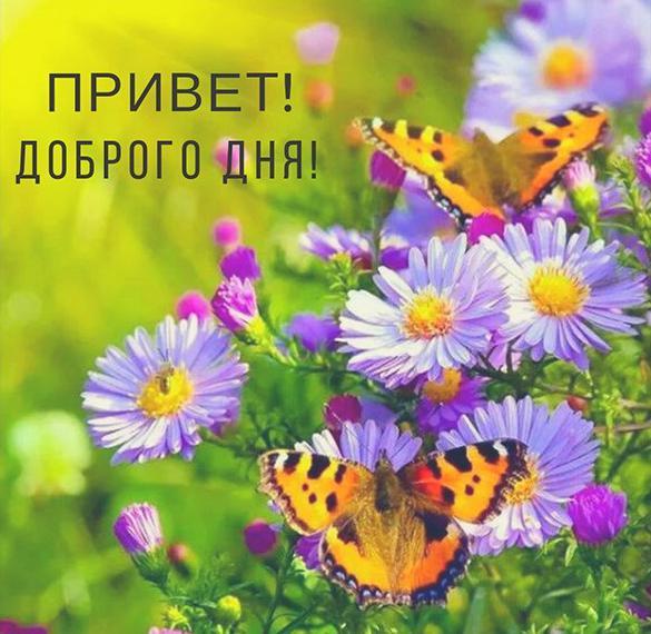Открытка привет доброго дня