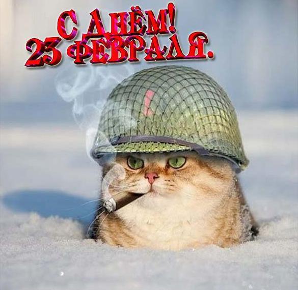 Открытка с 23 февраля с котиками