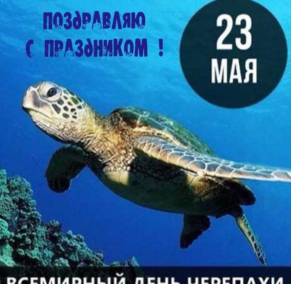 Открытка с днем черепахи