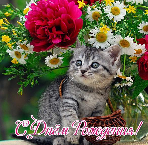 Красивая открытка с днем рождения с котами