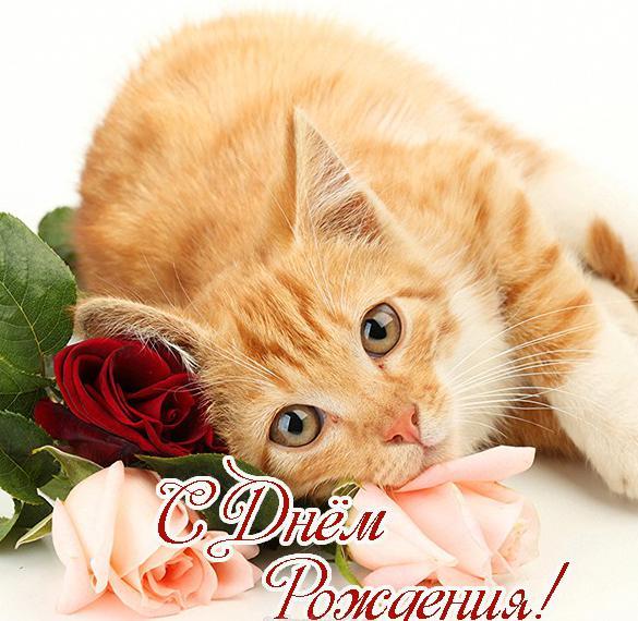Фото открытка с днем рождения с котенком