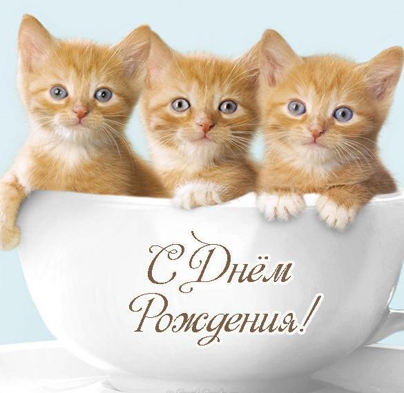 Открытка с днем рождения с котятами