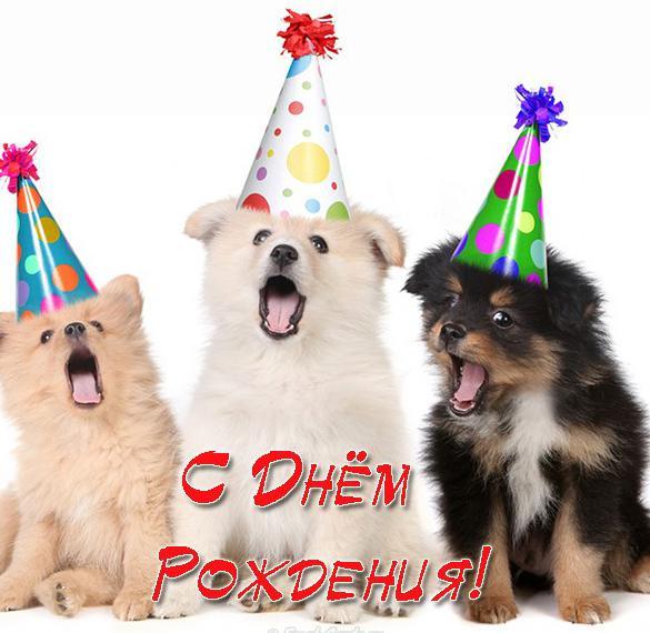 Открытка с днем рождения со щенками