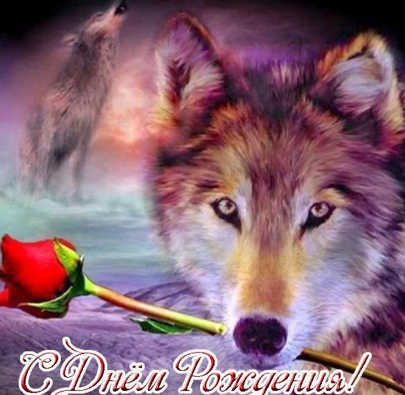 Открытка с днем рождения с волком