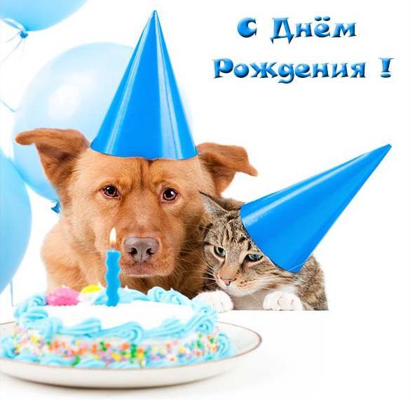 Открытка с днем рождения женщине с собачкой