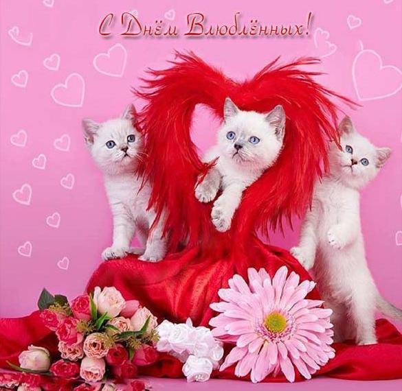 Открытка с днем влюбленных с животными