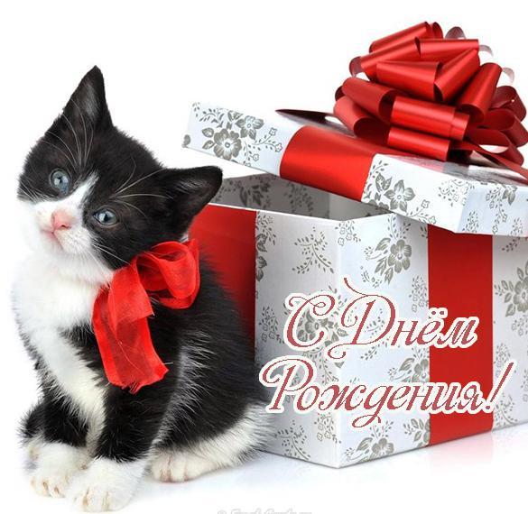 Открытка с днем рождения с котенком