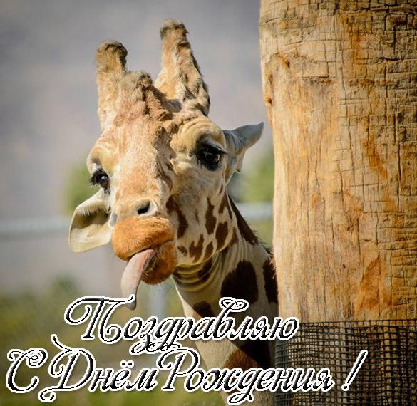 Открытка с жирафом с днем рождения