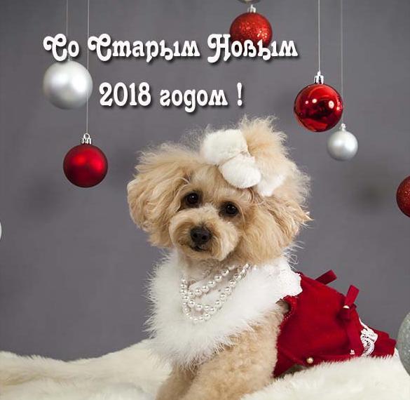 Открытка со Старым Новым Годом собаки