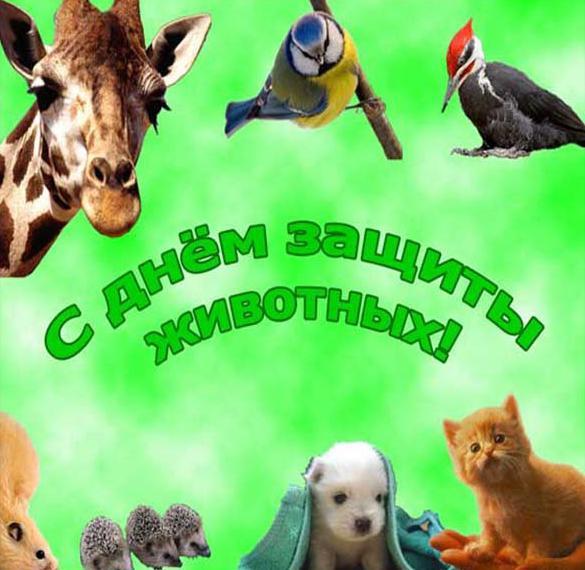 Открытка на всемирный день животных