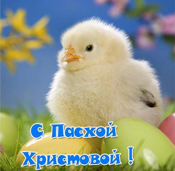 Пасхальная открытка с яйцом и цыпленком