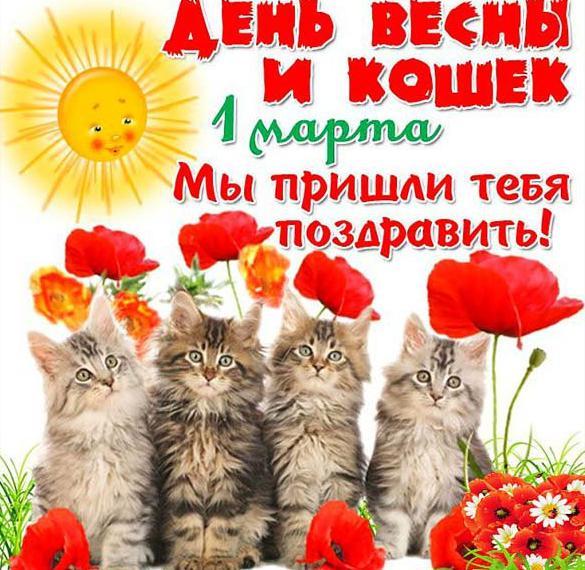 Картинка с поздравлением с днем кошек