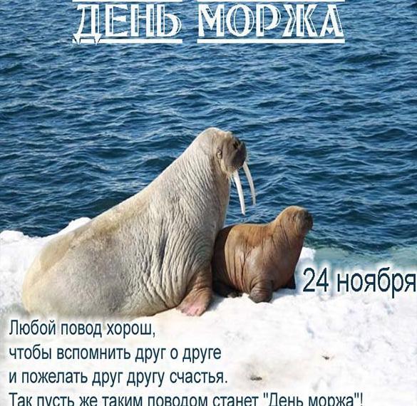Поздравительная картинка с днем моржа