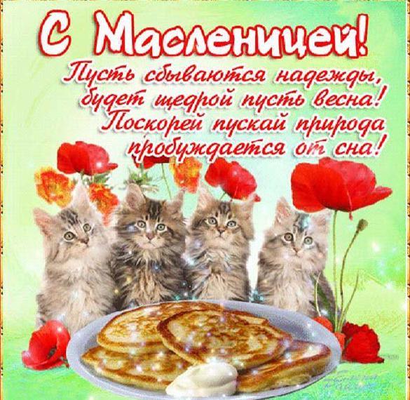 Прикольная открытка с поздравлением с началом Масленицы