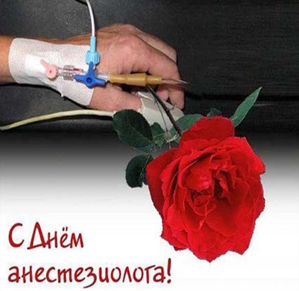 Прикольная картинка на день анестезиолога