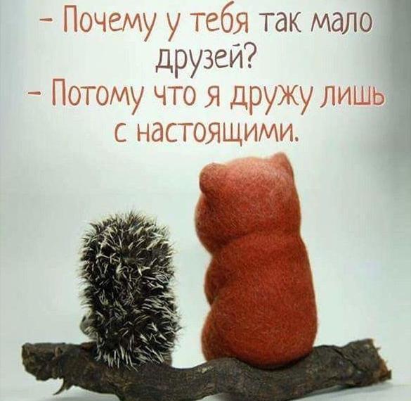 Прикольная открытка про дружбу