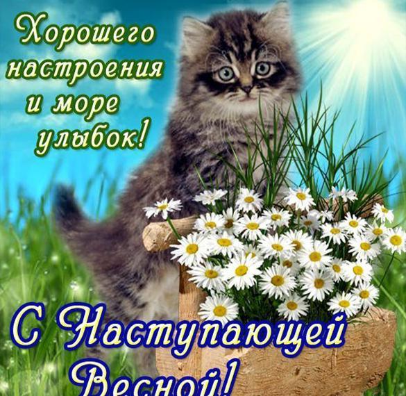 Прикольная открытка с 1 днем весны