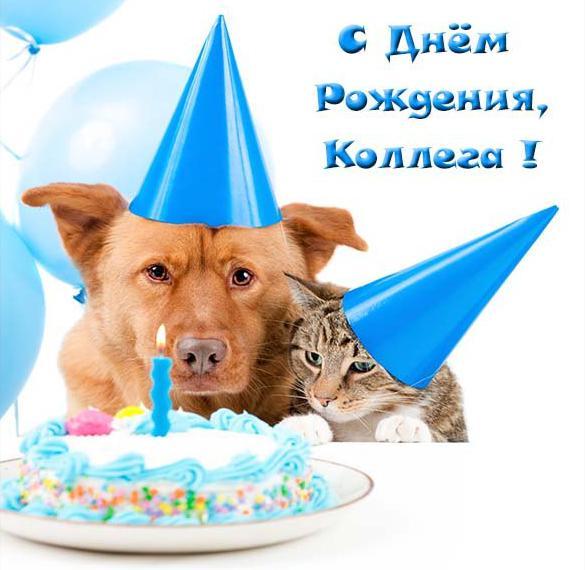 Прикольная открытка с днем рождения девушке коллеге