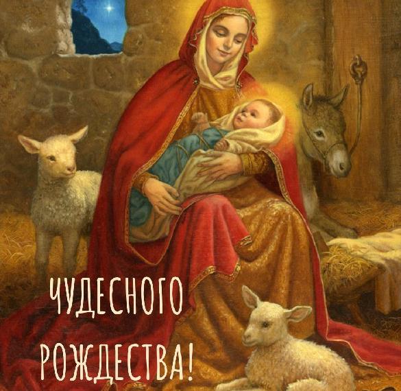 Рождественская фото картинка