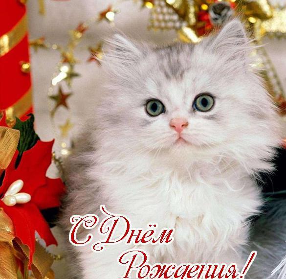 Открытка с днем рождения котенок
