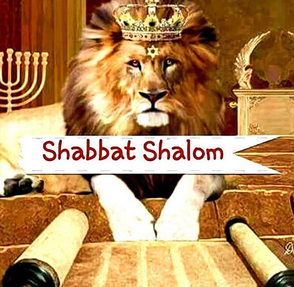 Картинка Шабат Шалом со львом