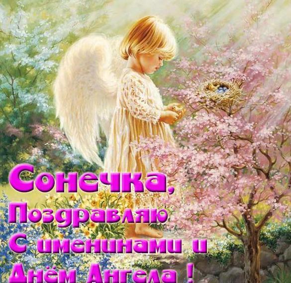 просто модное, картинки день ангела софия получаются четкими