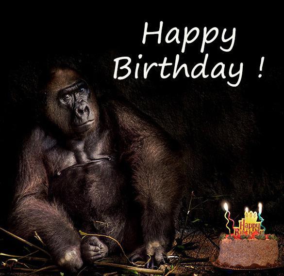 Смешная картинка с днем рождения на английском