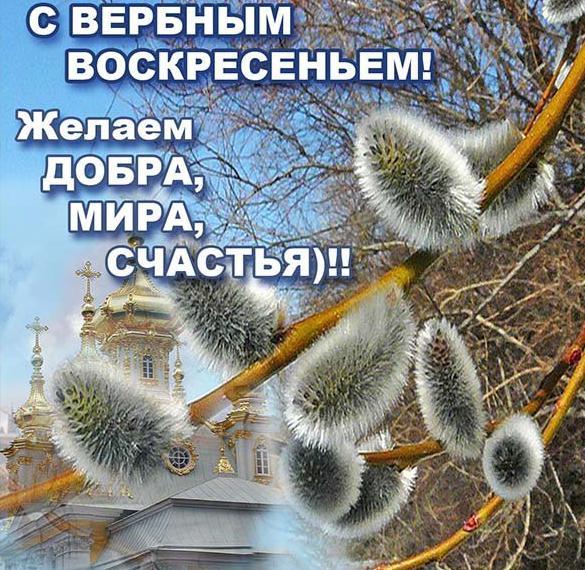 Короткое поздравление на Вербное Воскресенье в открытке