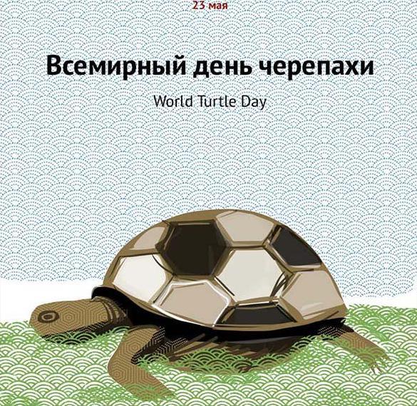 Картинка на всемирный день черепахи