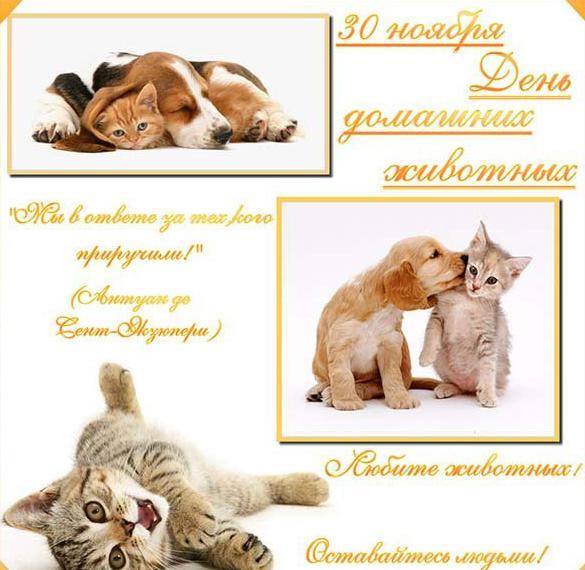 Картинка на всемирный день домашних животных 30 ноября