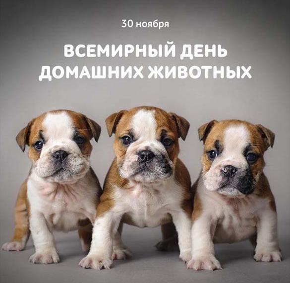 Картинка на всемирный день домашних животных
