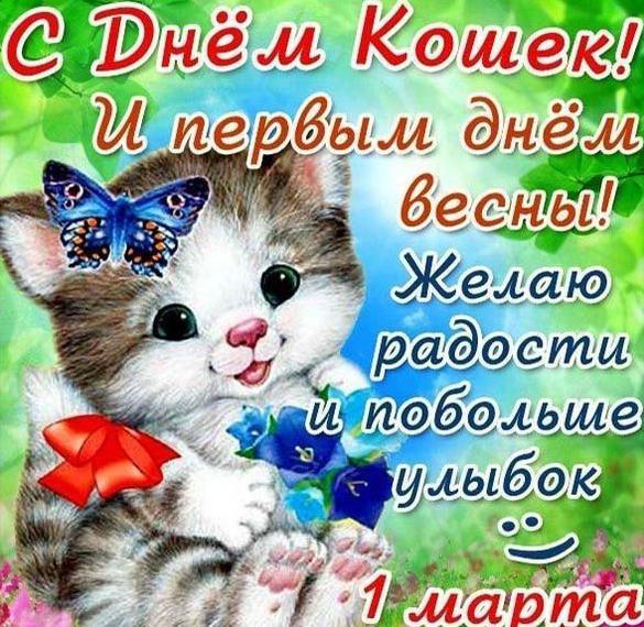 Картинка на всемирный день кошек