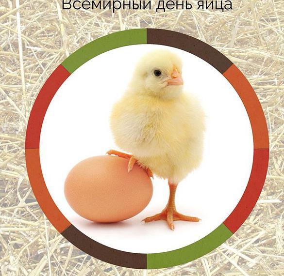 Картинка на всемирный день яйца