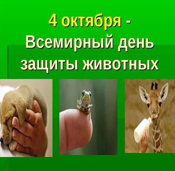 Картинка на всемирный день животных 4 октября